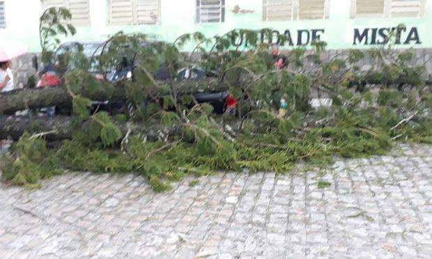 Árvore caiu em frente à Unidade Mista da cidade. WhatsApp/Rádio Jornal Pesqueira