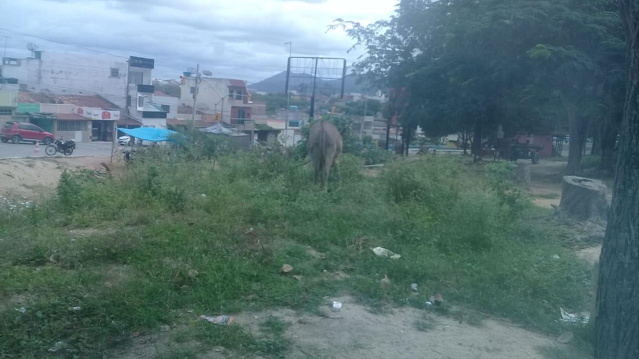Moradores denunciam praça abandonada e com lixo em Belo Jardim