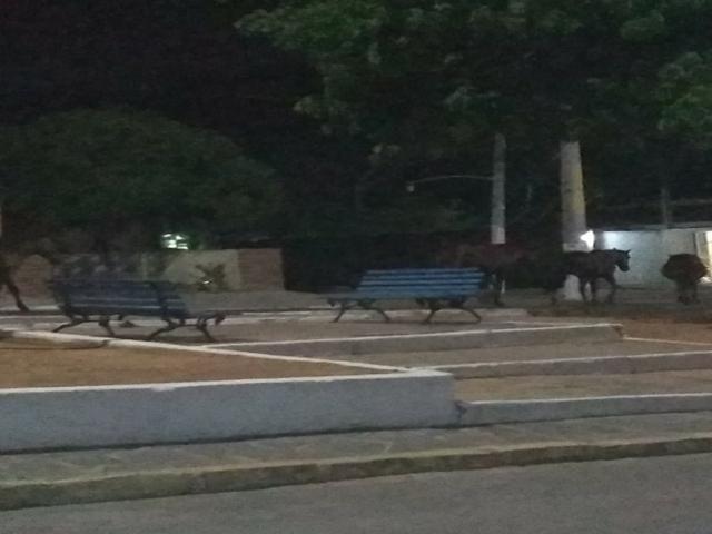 Animais soltos na rua atrapalham o trânsito em Belo Jardim