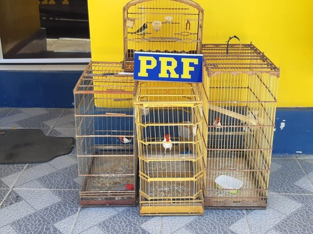 Aves silvestres são recolhidas durante fiscalização em Garanhuns