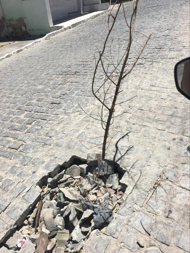 População sinaliza buraco com galho em Xucuru e pede ajuda