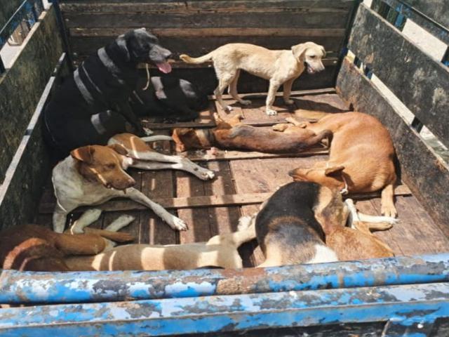 Prefeitura de São Bento do Una recolhe cães abandonados