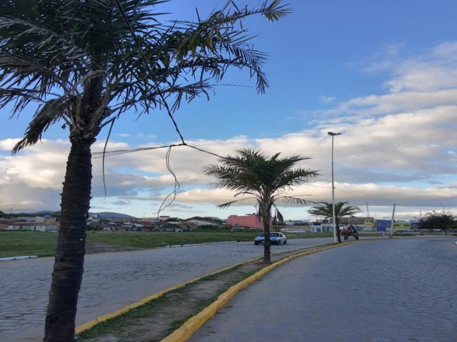 A prefeitura das gambiarras: Fios de alta tensão continuam amarrados em árvore do Pátio da Feira