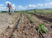 Após regularização municipal, agricultores familiares voltam a ser beneficiados pelo Garantia-Safra