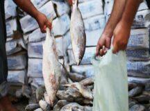 Prefeitura de Belo Jardim emite nota de esclarecimento sobre a entrega dos peixes na semana santa