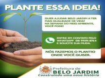 Durante a semana do Meio Ambiente, Prefeitura de Belo Jardim doa mudas de árvores em sistema delivery