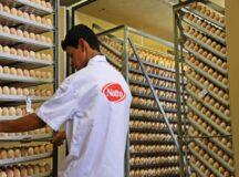 Natto oferece vaga de emprego para jovem aprendiz em Belo Jardim