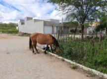 Cavalo é flagrado solto no bairro do São Pedro