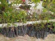Belo Jardim recebe 500 mudas de árvores e intensifica doação aos que quiserem ajudar o meio ambiente
