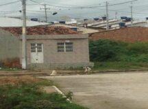 Cães soltos no Pontihão atacam outros animais e causam revolta nos moradores