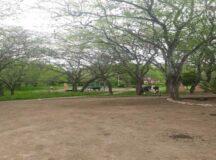 Animais soltos são flagrados no Parque do Bambu em Belo Jardim