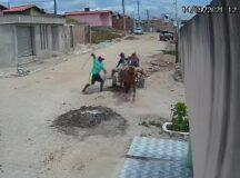 Câmeras flagram carroceiro chicoteando animal em Belo Jardim